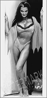 Sexy Lily The Munster Portrait High Quality Metal Magnet 2.5 x 5 Fridge 8886