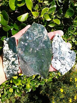 Three (3) Old Stock Top Green Moss Agate Slabs Prineville Central Oregon 9.3Oz!