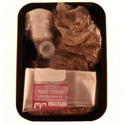 Kit coltivazione funghi Magic mushrooms grow substrato sterilizzato sterile