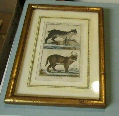 Mississippi Lynx & Caracal 19th Century Hand Colored French Book Plate Art Print