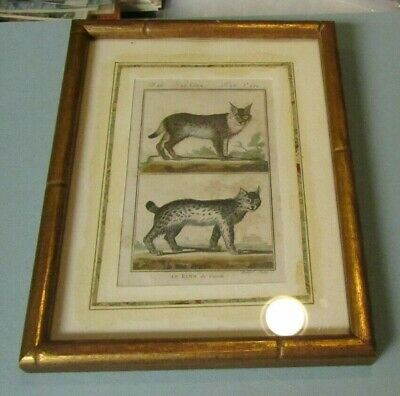 Canadian Lynx 19th Century Hand Colored French Book Plate Hubert Art Print