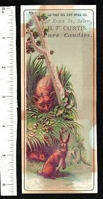 Rabbit H.f. Curtis Pure Candies Salem 1880'S Victorian Advertising Trade Card