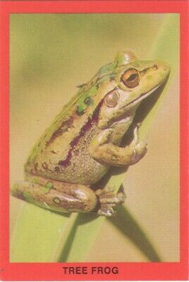 Tip Top Bread Australia - Tree Frog