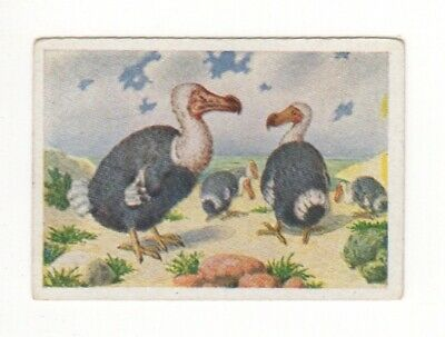 German World Wonders Series. Extinct Dodo