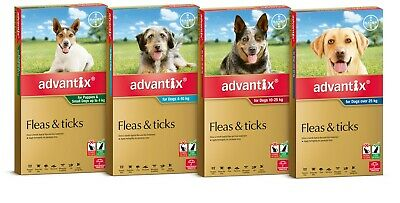 Advantix for Dogs 6 Pack All size Repels & Kills Fleas, Ticks & Biting Insects