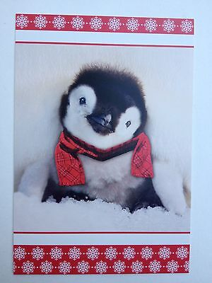 "Christmas "" Cozy Penguin Chick "" Boxed 18 Cards And Envelopes Brand New In Box"