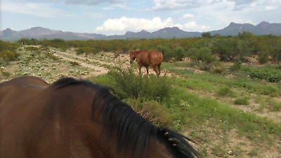 Land For Sale | Arizona  | $39.99 a Month with MOUNTAIN VIEWS!