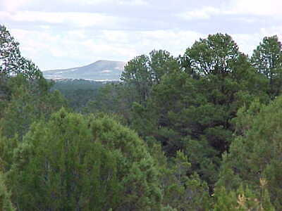 Lower Price 36 Ac Northern Arizona 6000' Elevation, Road Frontage,Water