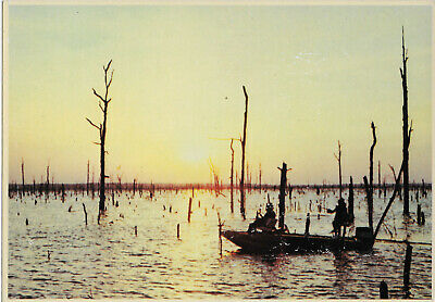 Swamp fishing in Louisiana vintage postcard