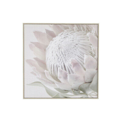New MUSE Protea Wall Art