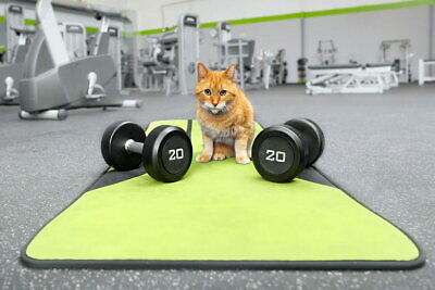 108717 Milo Tabby Tiger Mixed Breed Cat At Gym Weights LAMINATED POSTER DE