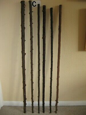 Six new blackthorn/hawthorn walking stick shanks seasoned and steam straightened