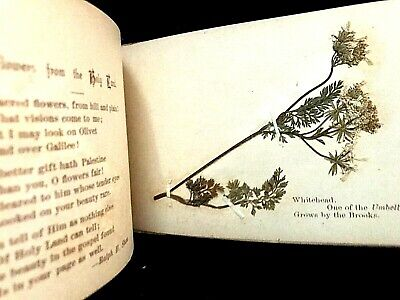 "Antique 1890s ""Wild Flowers of the Holy-Land"" Book"