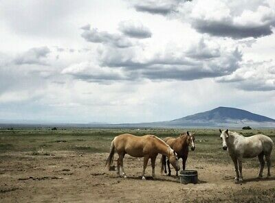 Land for Sale   Colorado 5 Acres   Owner Finance $199 Down! 0% for 50 Months