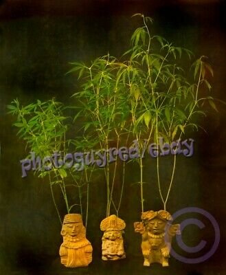 Pre-Columbian folk art figures and weed plants 8 x10 inch photograph