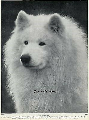 "Champion Samoyed Dog  ""Kara Sea""  1934  Vintage Dog Photo Print"