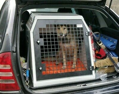 Dog Box UK Single Dog Transportation Box DB47