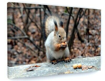 RED SQUIRREL WALL ART CANVAS PRINT PICTURE VARIETY OF SIZES