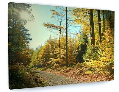 STUNNING WINTER WOODLAND FOREST ROAD CANVAS PICTURE PRINT WALL ART #4974