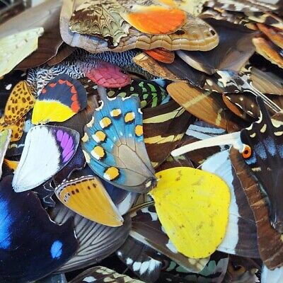 25 Pieces Assorted Real Butterfly Moth Wings Wholesale Lot Mix
