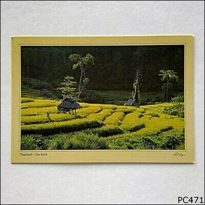 Terrace Rice Fields Northern Thailand Postcard (P471)