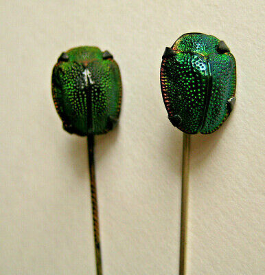 2 antique victorian iridescent forest green SCARAB BEETLE Stick Pins!