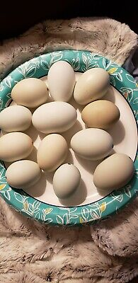 3 Dozen Nice Blown Chicken Eggs. Hole On Large End Pysanky Crafting