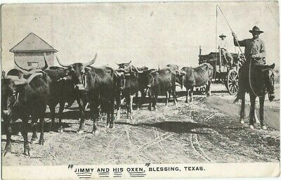 Blessing, TX Texas 1910 Postcard, Jimmy and Oxen