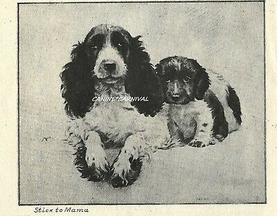 Morgan Dennis English Springer Spaniel Mom And Puppy 1946 Scarce Small Art Print