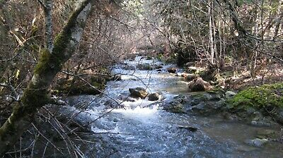 20 Acre Mining Claim on Middle Creek, Douglas County OR. Nice Pickers! See Video