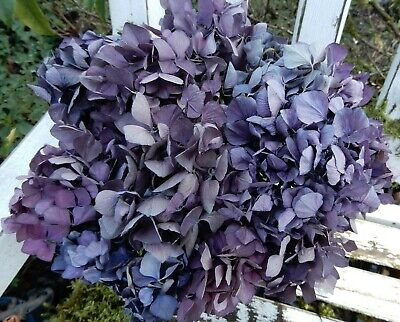 12 Dried Hydrangea Flowers Purples + Violet Pinks Primitive DIY Craft Farmhouse