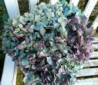 9 Dried Hydrangea Flowers Light Blue Green, Cream + Purple Wedding DIY Farmhouse