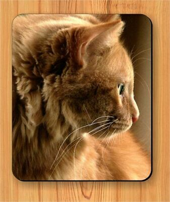 CAT GINGER TABBY BREED MOUSE PAD -olk8X