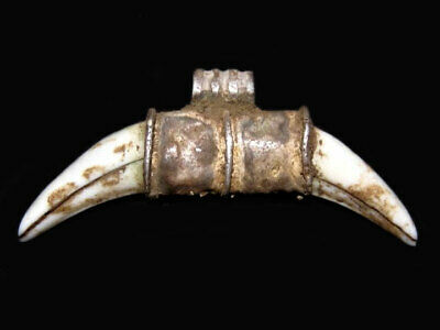 Extremely Rare Roman Period Wolf Teeth Lunula Amulet Set In Silver Case Loop+++
