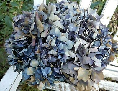 12 Dried Hydrangea Flowers Dark Blues and Purples Wedding Primitives SECONDS