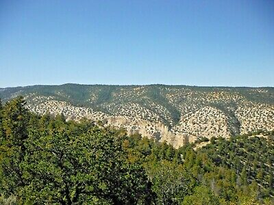 10 Forested Acres Duchesne Utah Hundreds Of Trees Views