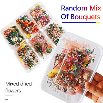 1 Box Real Dried Flower Dry Plants for Aromatherapy Making Craft DIY Accessories