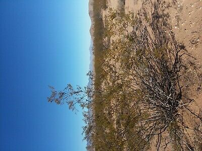 Vacant mohave county lot.