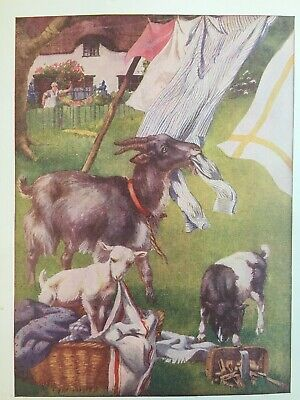 Adorable Farm Vintage Art Goats eating Hanging Laundry on Wash Day Print 1924