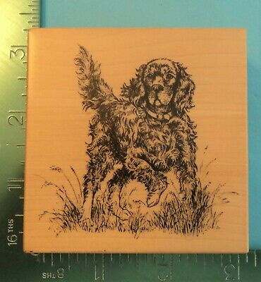 IRISH SETTER HUNTING DOG Rubber Stamp by PSX Designs - G-2586