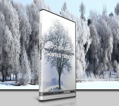 200 Winter Snow Trees Digital Photoshop Overlays Backdrop Background Photography