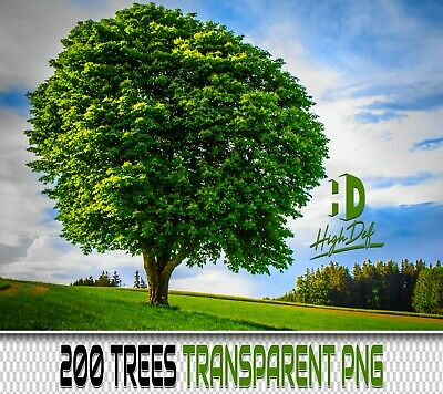 200 Green Trees Transparent Png Digital Photoshop Overlays Backdrops Backgrounds