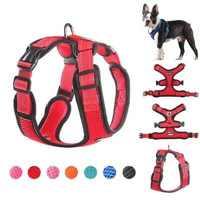 Cat Harness Adjustable Neck and Chest Chihuahua Puppy Dog Pets Cat Harness Small