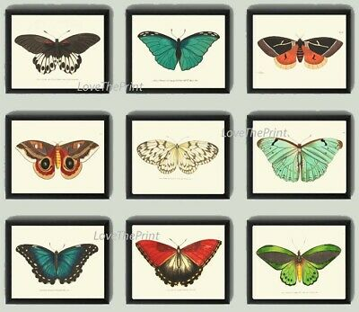 Unframed Butterflies Print Set 9 Prints Antique Beautiful Colorful Home Wall Art