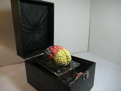 Medical School Advanced Model of Human Brain with  case.