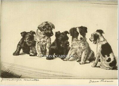 RARE DOG Print 1935 by Diana Thorne Scottie Terrier Jr League Committee