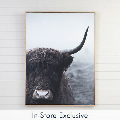 New MUSE Highland Cow Wall Art