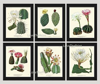 Unframed Botanical Wall Art Print Set of 6 Antique Cactus Flowers Home Decor