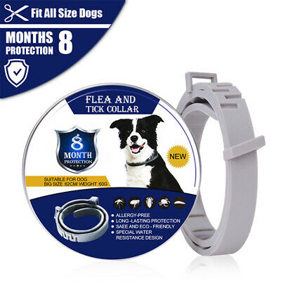 Flea and Tick Collar for Dogs With Adjustable Waterproof Pets 8 Month Protection