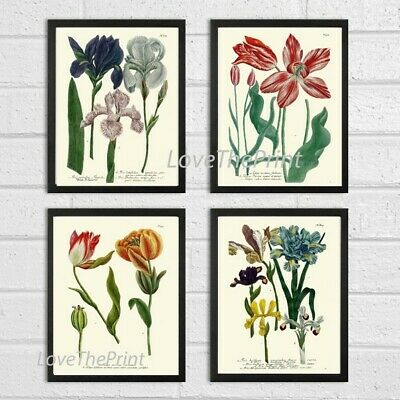 Unframed Botanical Wall Art Print Set of 4 Antique White Red Flowers Home Decor